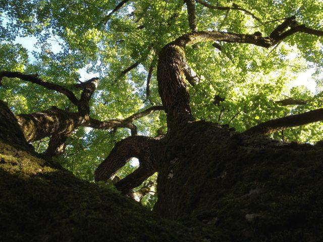 Vue dpuis les racines